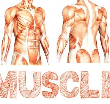 Muscle Font